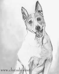 Parson's Jack Russell Pet Portrait Commission