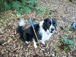 Blooy the arrow hunter !