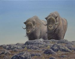 On the Ridge - Musk Ox (oil on Canvas)