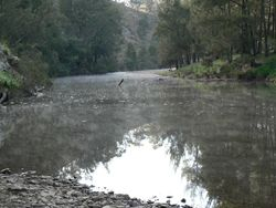 Early morning on the Abercrombie River