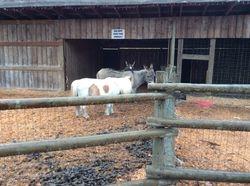 Preschool visit to Galey Farms