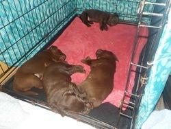 Goodnight pups
