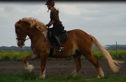 Learning the Canter! Love this Pic!