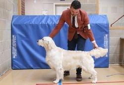 Class 13 No.161 Open Dog