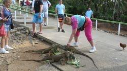 Lynda with Iguana in Roatan