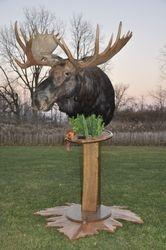 "50""moose on custom base"