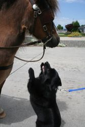 Com'on I wanna pet the pony!  Can we go for a ride?  Can we, can we?!?!?!?