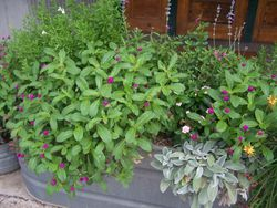 Plants in front of shops