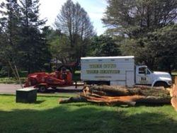 Tree Guys Glen Mills PA