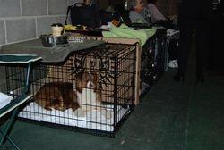 Ms Stella at Atlanta Dog Show
