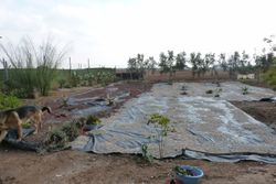 New Cactus/Succulent Garden.