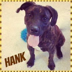 Hank (TN Foster)