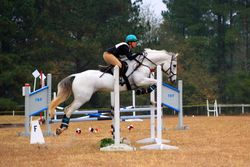 Pepperjack, 2nd place Open Prelim, Jumping Branch Farm Schooling HT, November 2013