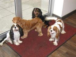 Monty, Sparky, Bobesh & Ricky
