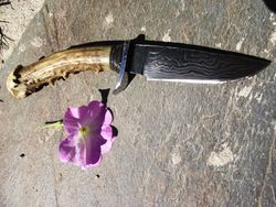 Damascus with antler Handle