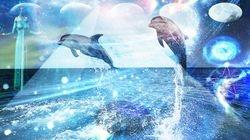Dolphin Guidance for Interdimesional Travel