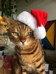 Hi, I'm Santa Twig - Aren't I Handsome!!!
