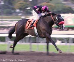 2007 G1 Santa Anita Hcp.