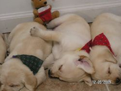 Goldie and her paws