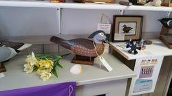 Maryland Wood Duck