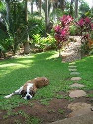 Tropical Gardens of Marina Chacala