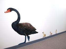 Childcare - swans