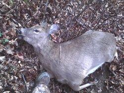 Meg's 1st Deer!!