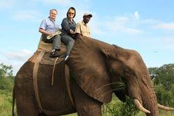 Elephant Safari - Zimbabwe