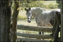 Horse,New Brunswick