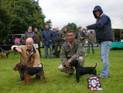 NWTF Open Show 2007 Best Coloured Terrier (right) Reserve (left)