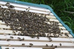 Last bee's to move in