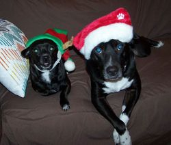 Bella FKA Massey and Linus