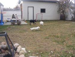 Dakota, Bella and Dexter having fun!