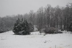 Dog Town-Winter-Dec,2011
