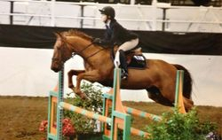 Pony loves to jump!
