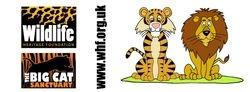 Lion & Tiger WHF mug