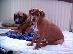 Zeus & Remus