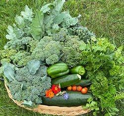 Let the Harvesting Begin!