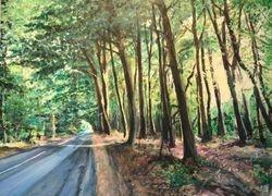 Skovens lys