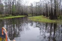 Swamp boat rides