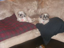 Pugsy and Tiffany
