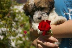 Baby Jasmine