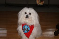 Nikos with his TDI tag and bandana