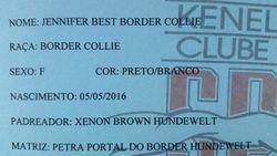 Jennifer Best Border Collie * VENDIDA *