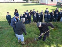 A past pupil planting a native tree!