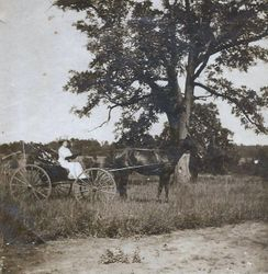 Lady on horse drawn cart in 96