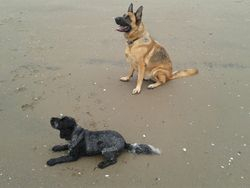 Cora & Oscar