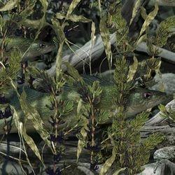 WTP 440 Fishoflauge Walleye