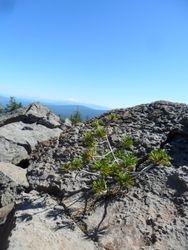 View of Mt. Shasta