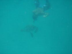 Dive, Dive!!!